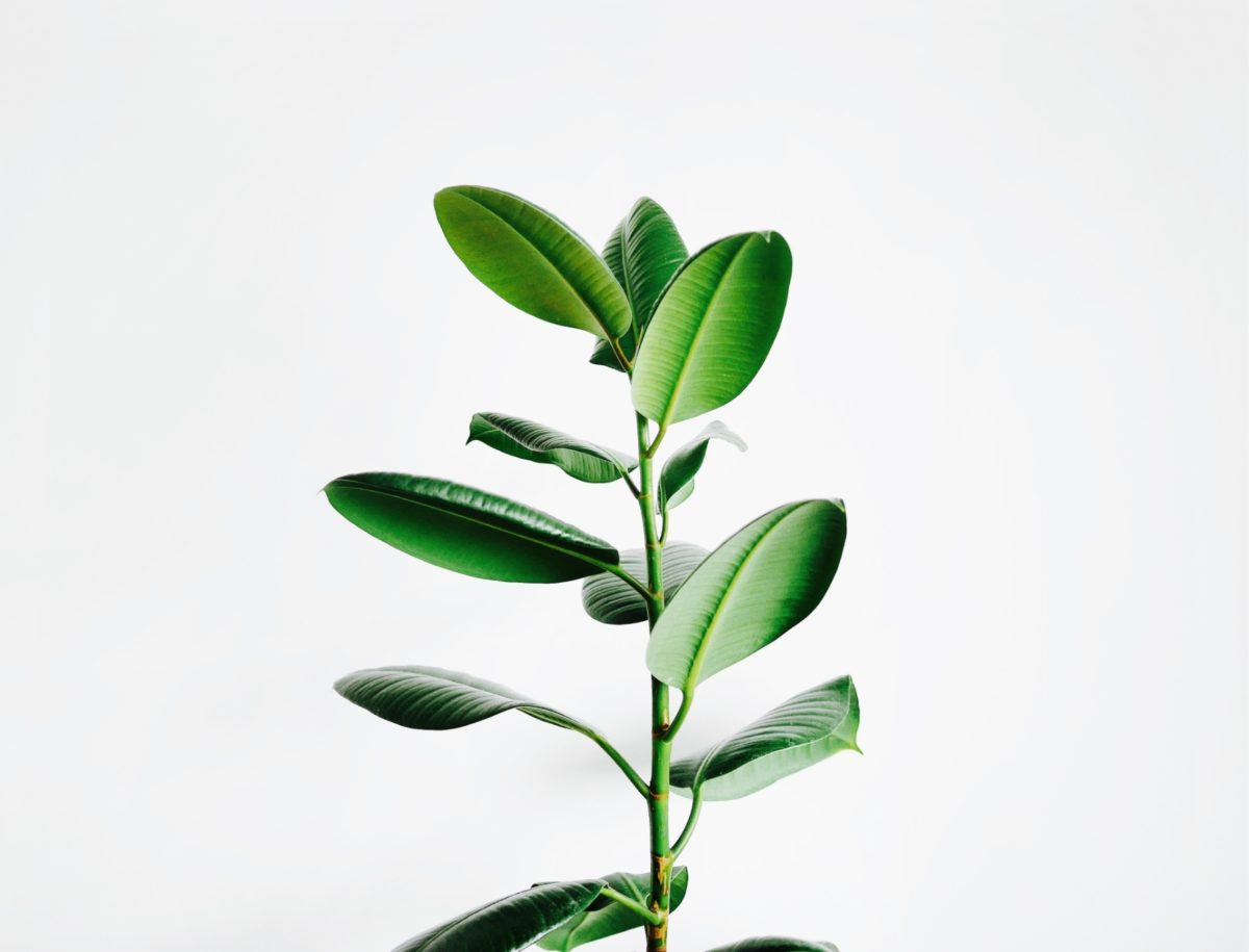 Image of Plant Representing A Website that is Designed To Grow